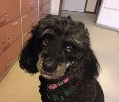 Shanta Cracks The Sads Teacher S Pets Dog Training