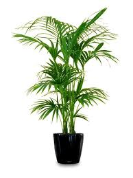 26 best large indoor plants for home