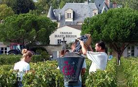 2009 looks set to be a vintage year for winemakers in France - Telegraph