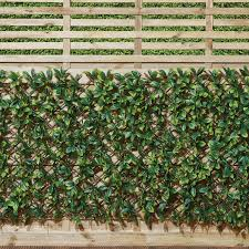 Expanding Laurus Fence