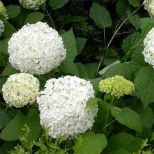 best plants for a cottage garden this