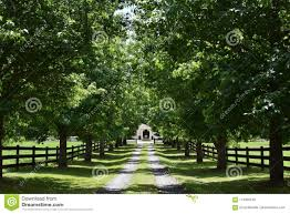 Luxury Green Tree Lined Driveway Stock Photo Image Of Wealthy Driveway 118400150