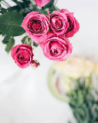 خلفيات ورود جميلة جدا اشكال مميزة من الورد رمزيات