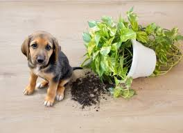 Flowers and Plants That Are Safe for Dogs | PetMD