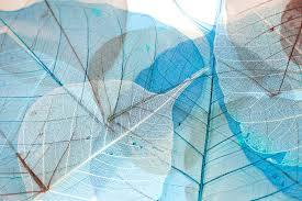 contemporary wallpaper vinyl nature