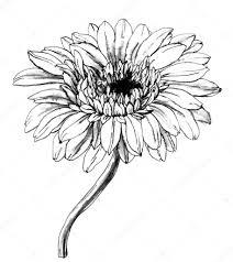 Ảnh đẹp: Tổng hợp các bức tranh tô màu hoa đồng tiền đẹp nhất dành ...