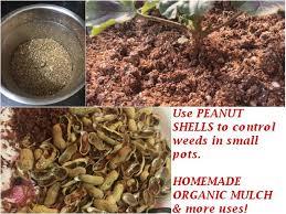 peanut ss in the garden organic