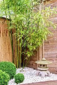 bamboo plants zen garden design