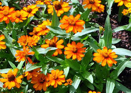 annual flowers and plants ideas landscape