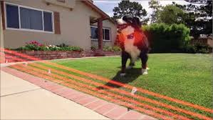 Best Invisible Dog Fence In 2020 Invisible Dog Fence Reviews And Ratings