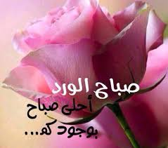 صباح الورد حبيبي اجمل صباح الفل والياسمين دلع ورد
