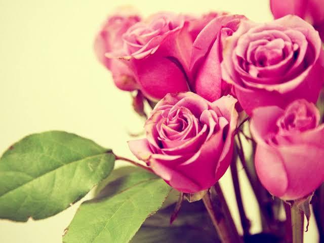::Desfile de Rosas AMDA::Hoy se presenta la Rosa Rosa AMDA  Images?q=tbn%3AANd9GcQguT5fB610uqAUl2xdybUlBKVYwhegrHKV22BcQryVrm0tnMUd&usqp=CAU