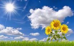bunga matahari flo bunga bunga