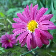 صور ورد Roses Pictures Home Facebook