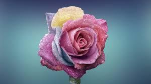ورود وازهار رائعه في الجمال Roses And Flowers Wonderful