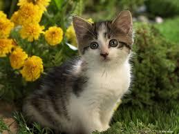 attractive cute cats photo hd wallpaper