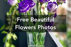 48 you will love free pics of flowers