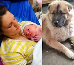 Shocker! Family Dog Mauls Newborn Baby To Death While The Mother Was In The  Toilet - Latestarena