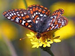 Image result for free bugs and butterflies picture