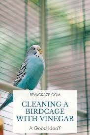 can i clean my birdcage with vinegar