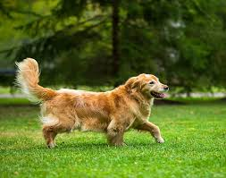 Invisible Dog Fencing In Indiana Play Safe Pet Fencing