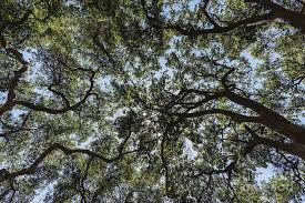 Image result for canopy cover