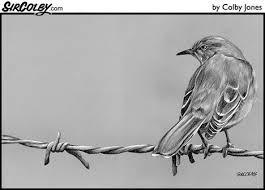 Mockingbird On Barbed Wire Sircolby Com