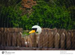 A Wooden Swan Looks Behind Fence Posts To See If The Photographer Has Already Left With Trees In The Background A Royalty Free Stock Photo From Photocase