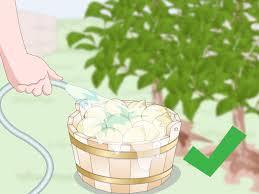 how to make garlic garden spray with