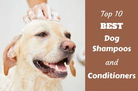 dog shoo and conditioners