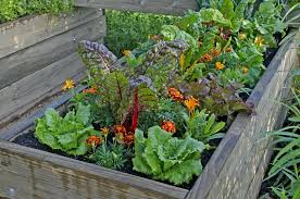 planting guide for home gardening in