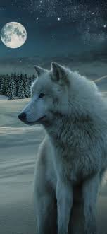 Animal Wolf 1125x2436 Wallpaper Id 767320 Mobile Abyss