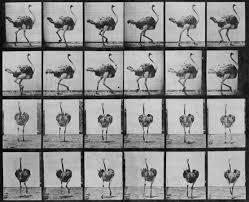The Static World In Motion of Eadweard Muybridge - DailyArtMagazine.com -  Art History Stories