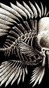 charles darwin bones seaman wallpaper