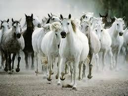 خلفيات خيول روعه