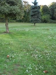 "Albert ""Albert Powell the Clown"" Charles Henry Frehafer Powell (1879-1943)  - Find A Grave Memorial"