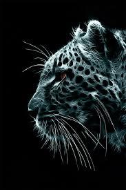 jaguar wallpaper 62 pictures