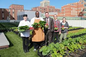 rooftop farm nourishing our community