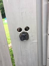 My Neighbor Cut Holes In His Gate So His Dog Could See Out Mildlyinteresting