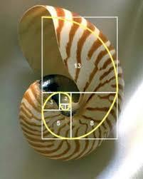 Simetría perfecta: Simetría del universo, secuencia de Fibbonacci ...