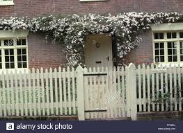 Pink Clematis On Cottage With Cream Wooden Picket Fence And Gate Stock Photo Alamy