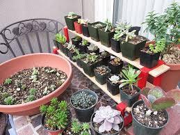 succulent potting soil mix