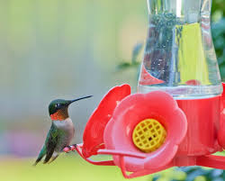 canning homemade hummingbird food