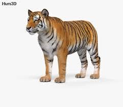 Tiger HD 3D model - Animals on Hum3D