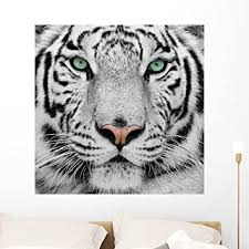 Amazon Com Wallmonkeys White Tiger Wall Decal Peel And Stick Graphic Wm15814 36 In H X 36 In W Home Kitchen