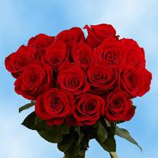 صور ورود طبيعيه اجمل صور الزهور عيون الرومانسية