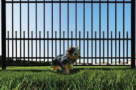 Keeping A Dog In The Backyard With Fence No Matter How Small Anchor Fence And Supply