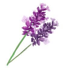 ラベンダーイラスト - 香り漂う紫の花の素材集☆ - チコデザ