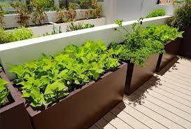 planter boxes in australia