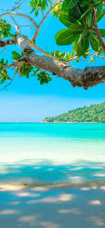 beautiful sea beach tree tropical